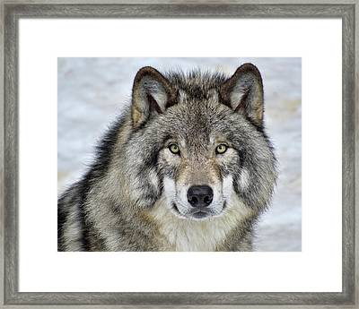 Framed Print featuring the photograph Full Attention  by Tony Beck