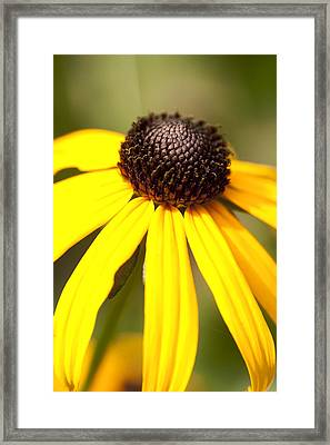 Full Bloom Framed Print by Alexander Mendoza