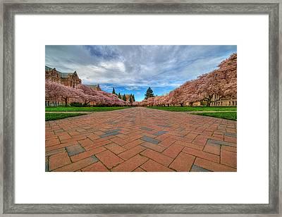 Full Bloom Framed Print by Dan Mihai