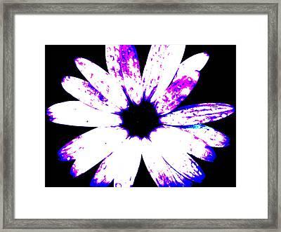 Full Bloom Framed Print by Tom Rickborn