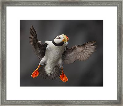 Full Flaps ! Framed Print by Alfred Forns