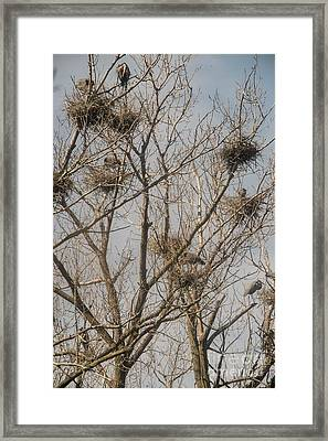 Framed Print featuring the photograph Full House by David Bearden