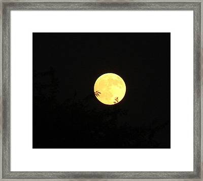 Full Moon August 2008 Framed Print