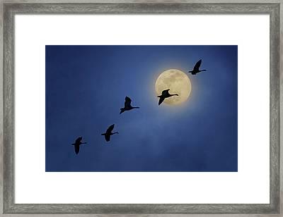 Full Moon - Geese Framed Print