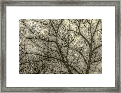 Full Moon In Spring Trees Yellow Framed Print by Randy Steele