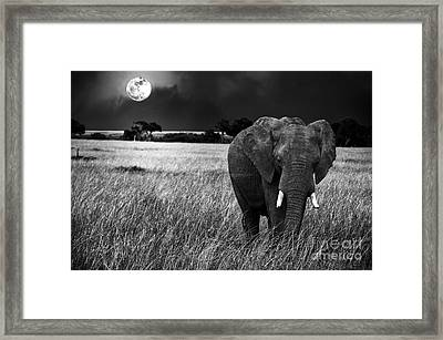 Full Moon Night Framed Print