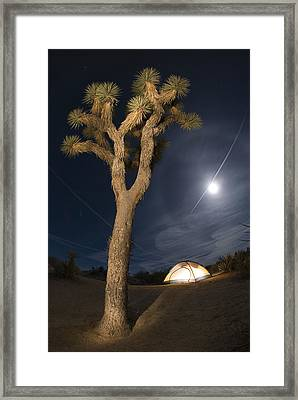Full Moon Rising Over A Joshua Tree Framed Print by Rich Reid