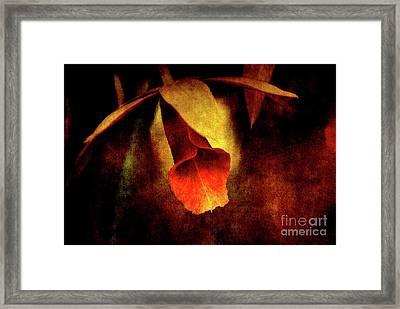 Full Of Grace Framed Print by Susanne Van Hulst