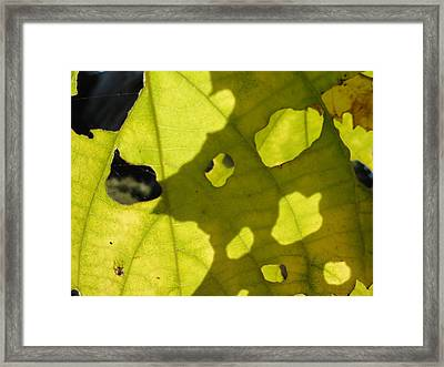 Full Of Hollow Framed Print by Trish Hale