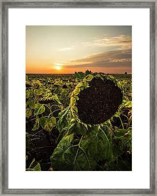Full Of Seed  Framed Print
