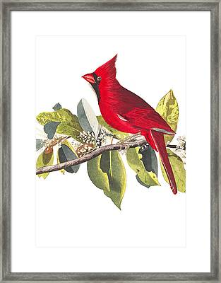 Framed Print featuring the photograph Full Red by Munir Alawi