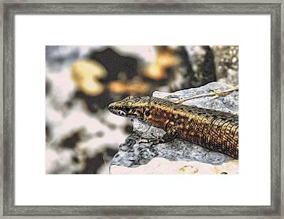 Full Up Lizard  Framed Print