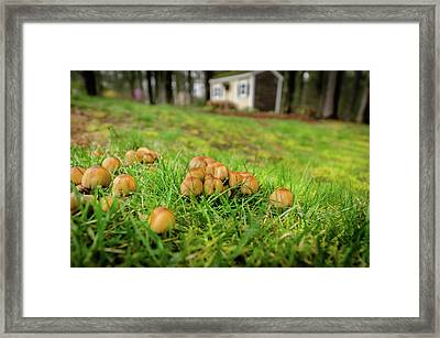 Fun Guys Framed Print by Andrew Crispi