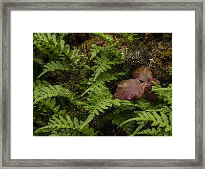 Fungi And Fern Framed Print by Jean Noren