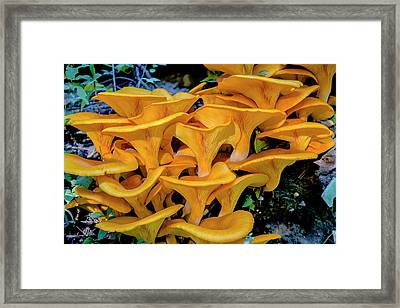 Fungi Framed Print by Jack R Perry