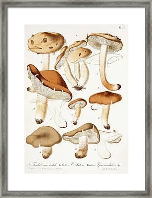 Fungi Framed Print by Jean-Baptiste Barla