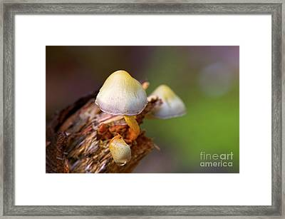 Framed Print featuring the photograph Fungi On A Stump by Sharon Talson