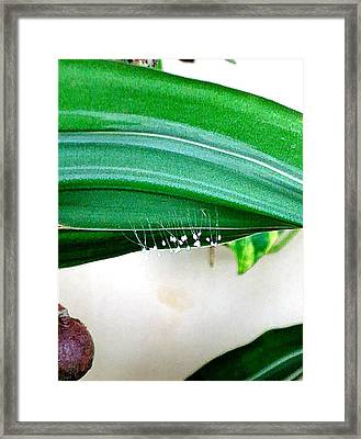 Fungi Stalks On Palm Frond Framed Print by Andrew Blitman