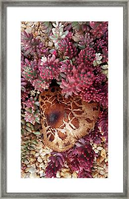 Fungus And Succulents Framed Print