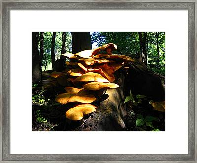 Framed Print featuring the photograph Fungus Colony 23 by Maciek Froncisz