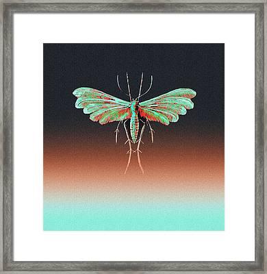 Fungus Moth In Greens Framed Print by Diane Addis