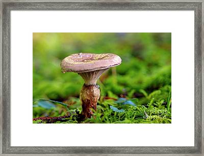 Framed Print featuring the photograph Fungus  by Sharon Talson