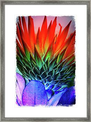 Funky Protea Framed Print
