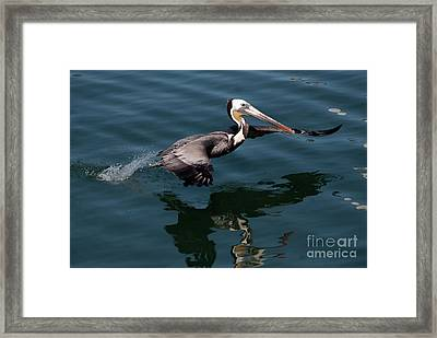 Funky Wings Framed Print