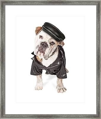 Funny Biker Bad Bulldog Breed Dog Framed Print by Susan Schmitz
