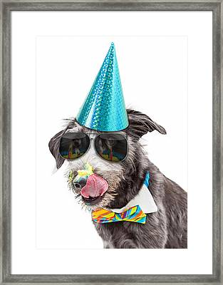 Funny Dog Eating Birthday Cake Framed Print by Susan Schmitz