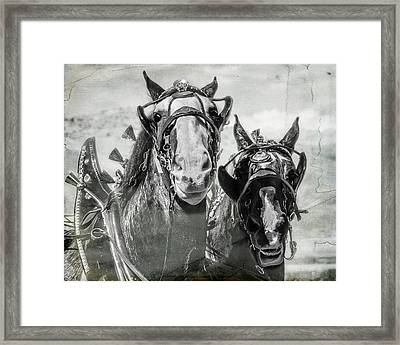 Framed Print featuring the photograph Funny Draft Horses by Mary Hone