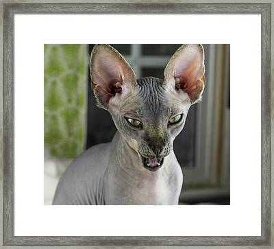 Funny Face Framed Print by Bizarre Lovecats