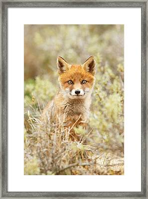 Funny Face Fox Framed Print by Roeselien Raimond
