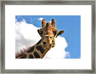Funny Face Giraffe Framed Print by Sheila Brown