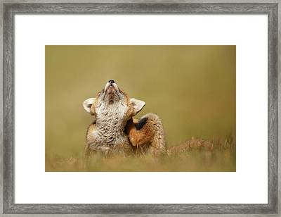 Funny Fox Kit Framed Print
