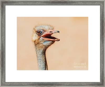 Funny Ostrich Bird Portrait Framed Print by Radu Bercan