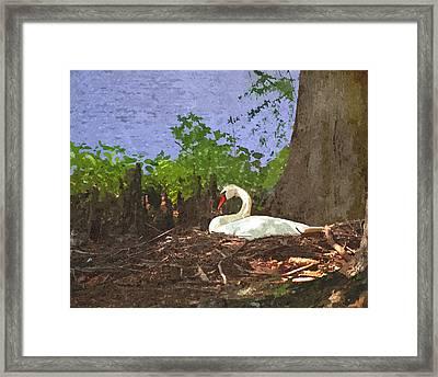 Furman University Swan Framed Print