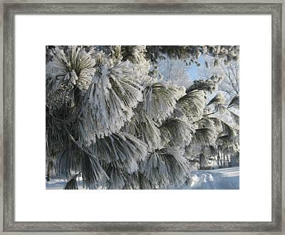 Furry Fir Framed Print by Toni Jackson