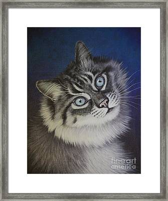 Furry Tabby Cat Framed Print