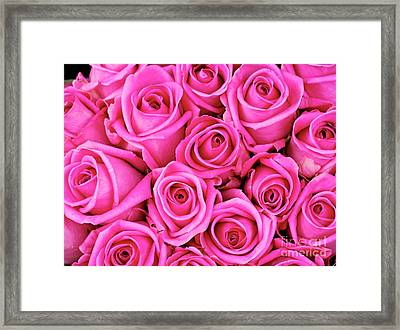 Fuschia Colored Roses Framed Print