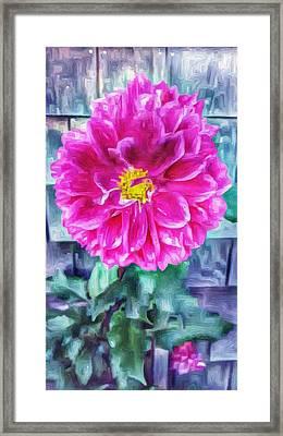 Fuschia Dahlia In Oil Framed Print
