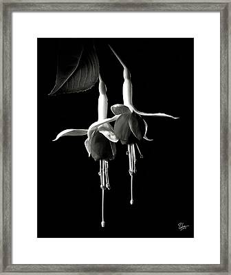 Fuschias In Black And White Framed Print