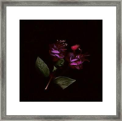 Fushia Fusion Framed Print by Sarah E Ethridge