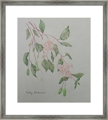 Fushia Framed Print by Sally Atchinson