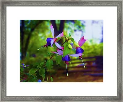 Fushias 08 Framed Print by Artzmakerz