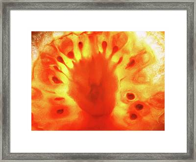 Fusion Framed Print by Tom Druin