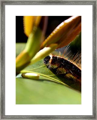 Future Butterfly Framed Print by Alexandra Harrell