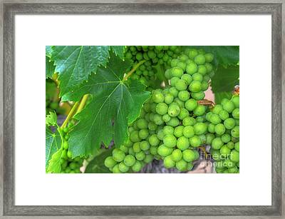 Future Chardonnay Framed Print by Kelly Wade