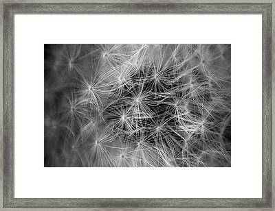 Future Wish In Black And White Framed Print
