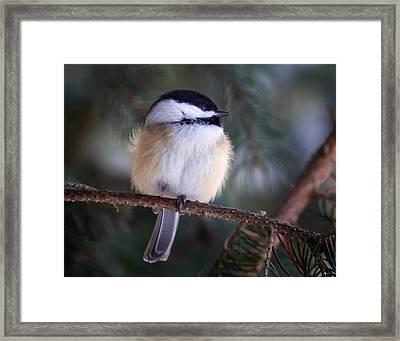 Fuzzy Chickadee Framed Print